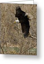 Diving Eagle Greeting Card