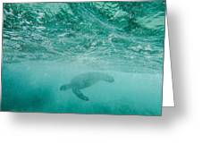 Diving Turtle Greeting Card