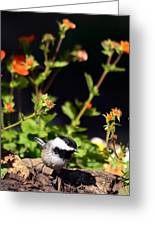 Do You Have Any Flowers That Lived Greeting Card by Lori Tambakis