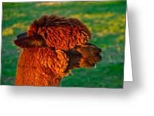 Do You Like My New Haircut Alpaca Greeting Card