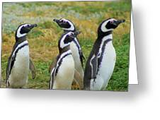 Do You Smell That - Penguins Greeting Card
