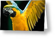 Do Your Exercise Daily Blue And Yellow Macaw Greeting Card