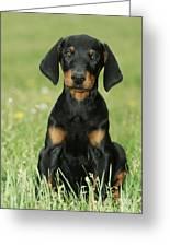 Doberman Pinscher Puppy Greeting Card