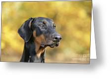 Dobermann Dog, In Autumn Greeting Card