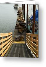Dock Sea Lions Astoria Or 1 A Greeting Card