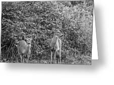 Doe A Deer Bw Greeting Card