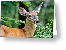 Doe Close Greeting Card