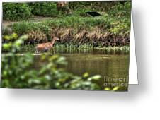 Doe Crossing The River Greeting Card