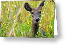 Doe In Morning Dew Greeting Card