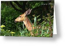 Doe In Tall Grass Greeting Card