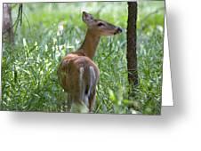 Doe Meadow Greeting Card