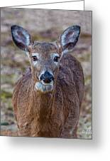 Doe Portrait Greeting Card