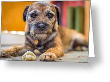 Dog And Chew. Greeting Card
