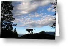 Dog And Sky Greeting Card