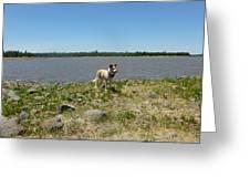 Dog At The Lake Greeting Card