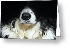 Dog Close Up Greeting Card