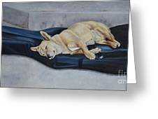 Dog Day Afternoon Greeting Card