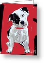 Dog Doggie Red Greeting Card