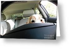 Dog Driving A Car Greeting Card