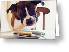 Dog Eating Biscuits At Table Greeting Card
