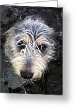 Dog Head Greeting Card
