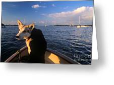 Dog In A Dingy At Put-in-bay Harbor Greeting Card