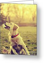 Dog In The Park Greeting Card by Jelena Jovanovic