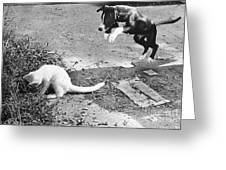 Dog Jumping On An Unsuspecting Kitten Greeting Card
