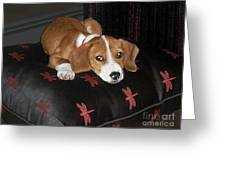 Dog - Mr. Oliver Relaxing Greeting Card