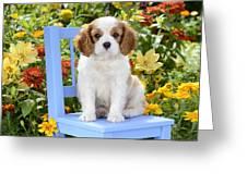 Dog On Blue Chair Greeting Card by Greg Cuddiford