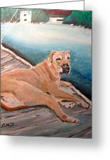 Dog On Dock Greeting Card by Michael Litvack