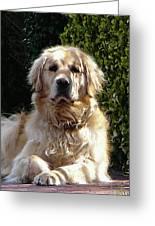 Dog On Guard Greeting Card