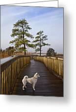 Shiba Inu On Path Greeting Card