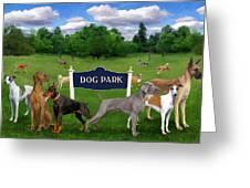 Dog Park Greeting Card