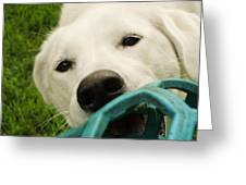 Dog Playing With Blue Ball Greeting Card