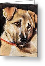 Dog Portrait Drawing Greeting Card