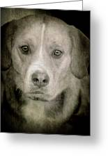 Dog Posing Greeting Card