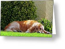 Dog Relaxing Greeting Card