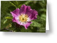 Dog Rose Textured Greeting Card