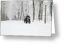 Dog Running In The Snow Greeting Card