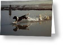 Dog Running Greeting Card by John Magnet Bell