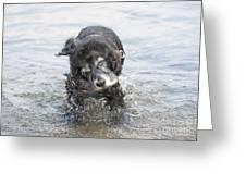 Dog Shake Greeting Card