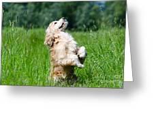 Dog Sitting Up Greeting Card