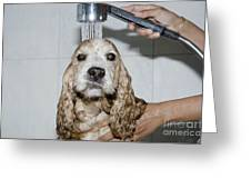 Dog Taking A Shower Greeting Card