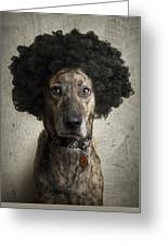 Dog With A Crazy Hairdo Greeting Card
