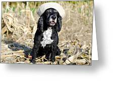 Dog With A Sailor Hat Greeting Card