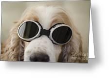 Dog With Eyeglasses Greeting Card