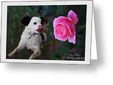 Dog With Pink Rose Greeting Card