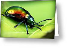 Dogbane Beetle Greeting Card