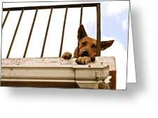 Doggie Down Time Greeting Card